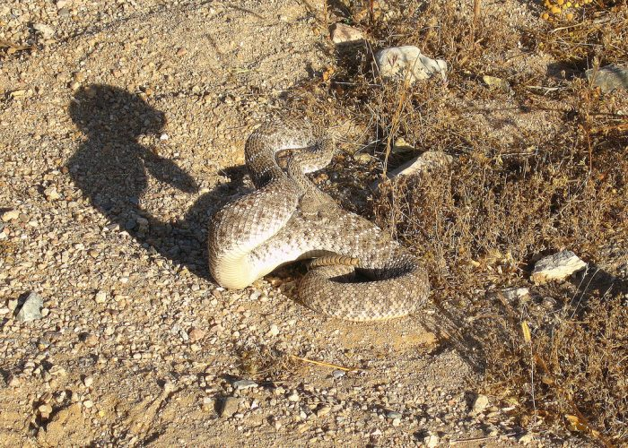 7. Watch your step! Tripping over a cactus isn't any fun and stepping too close to a rattlesnake is something you definitely want to avoid.