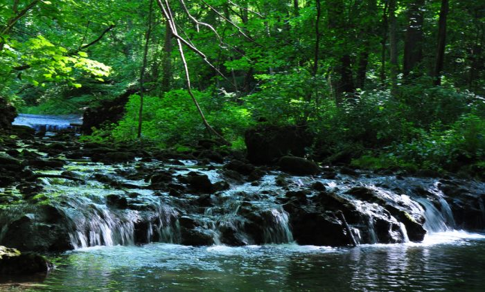 The nature preserve covers 1,000 acres and features a 25-mile network of footpaths that allows visitors to observe 400-year-old trees, limestone cliffs with waterfalls and overhangs and the official yellow spring.
