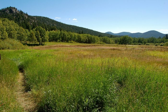 Enjoy vast open meadows resting at over 9,000 feet, including Frazer Meadow, Rim Meadow, and Greenfield Meadow, all of which allow access to backcountry camping areas.