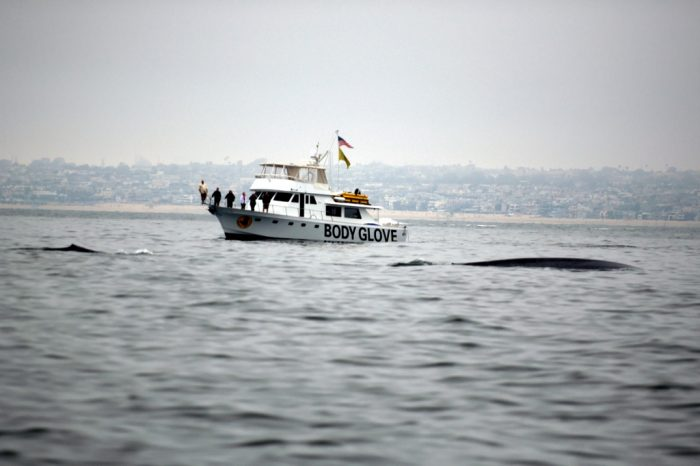 2. Whale watching tour