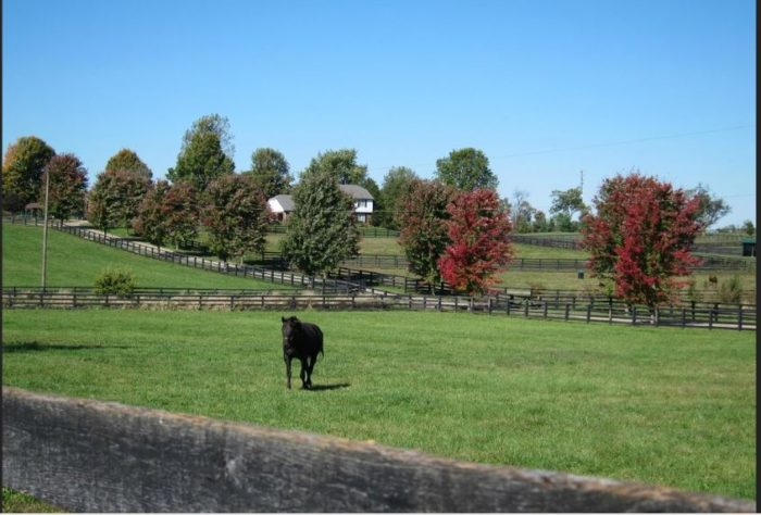 5. Visit Old Friends at Dream Chase Farm, Georgetown.