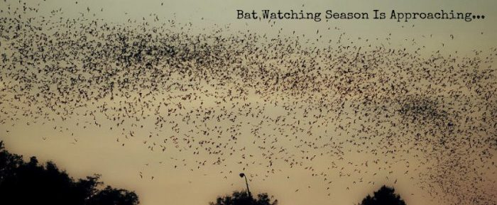6. Get up close and personal with the bats on a Lone Star Riverboat cruise.