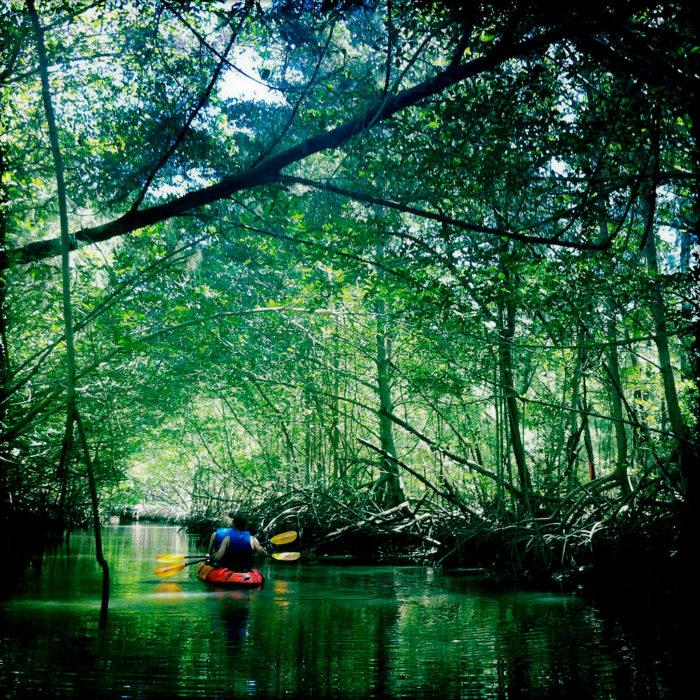 1. Kayak The Mangroves