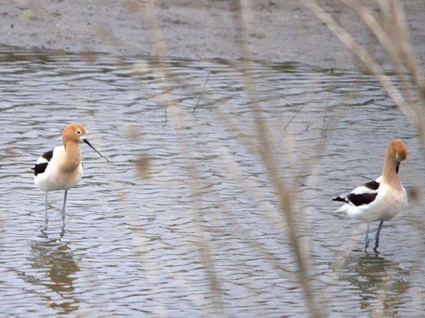 3. Wetlands & Wildlife National Scenic Byway