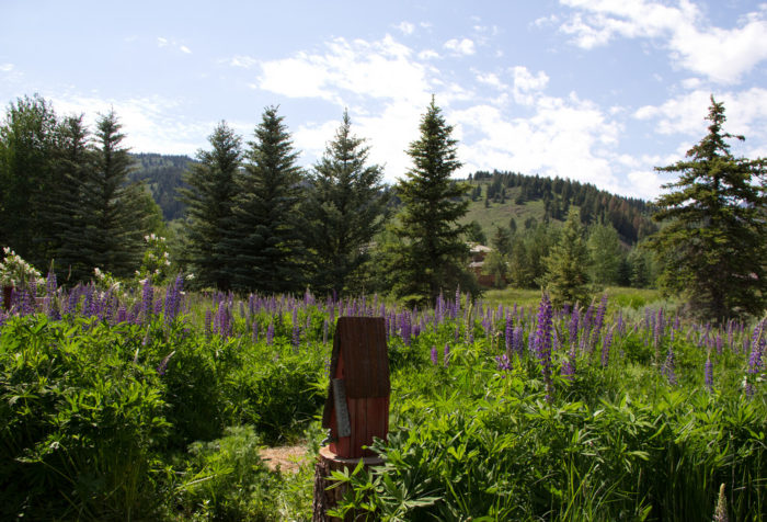 3. Drink in the beautiful sounds and smells of this wildflower meadow.