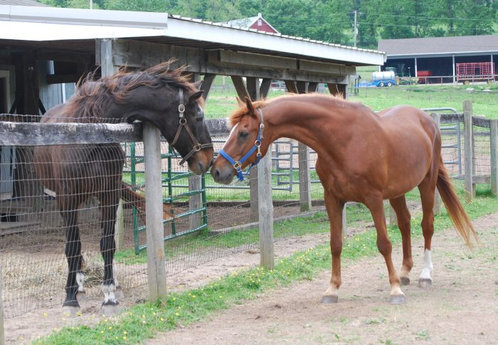 6. Ryerss Farm for Aged Equines, Pottstown