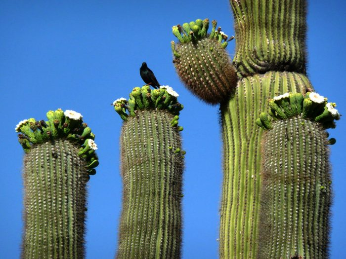 6. By the way, did you know it's illegal to damage or remove a saguaro cactus in Arizona? Similar statues also apply to other plants so follow your mom's advice: look but don't touch.