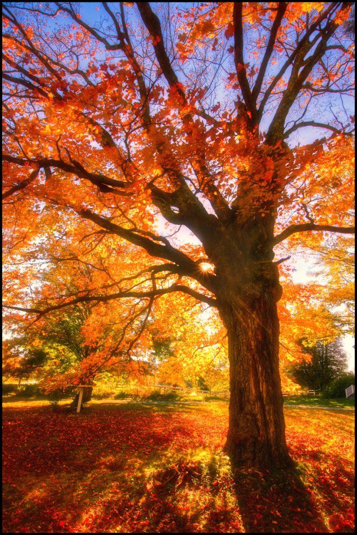 10.  Vermont foliage is unbeatable.