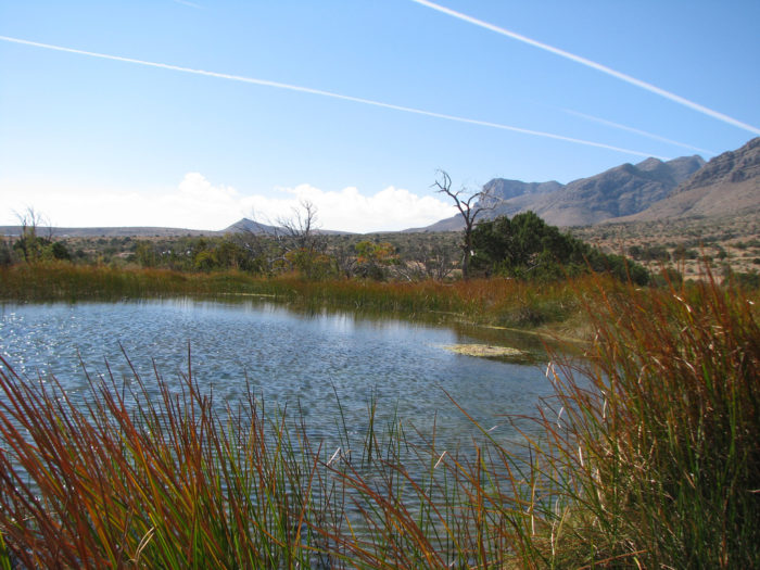 10. Smith Spring (Guadalupe Mountains National Park)