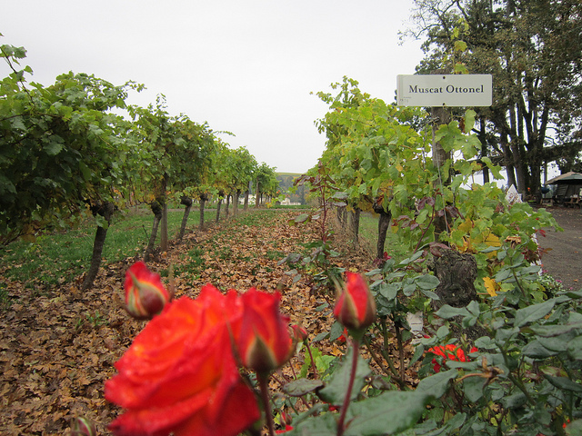 11. Visit Wine Country
