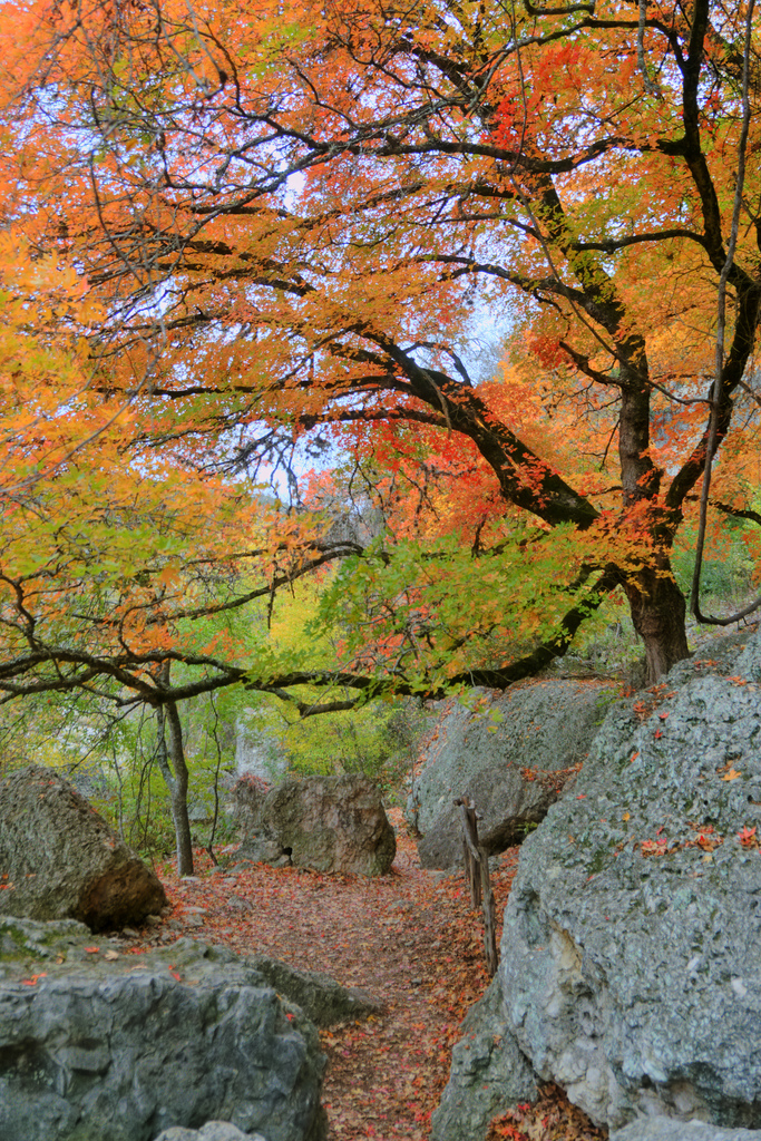 12. Lost Maples State Natural Area (Vanderpool)