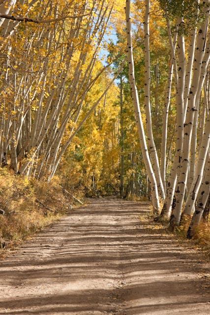 4. Last Dollar Road (Telluride)