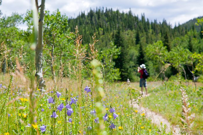 Experience the ever-changing beauty of alpine wildflowers as you explore the trails that wind throughout the park during the spring and summer.