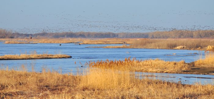 2. Witness the spectacle of the sandhill crane migration.