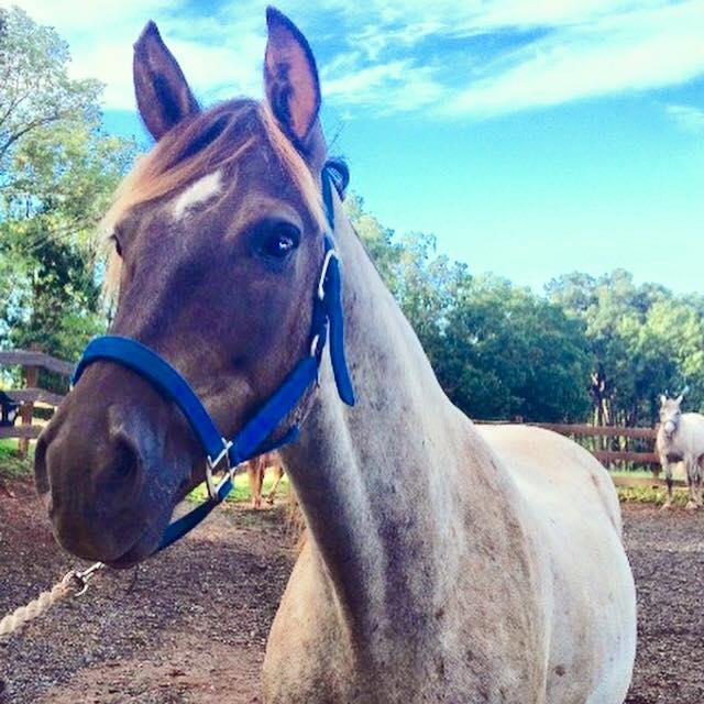 7. Go horseback riding at Red Buffalo Ranch in Collegeville.