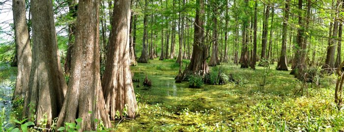 This is truly one of the hidden gems of Louisiana.