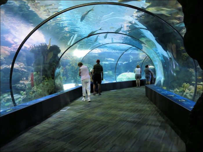 8. Take a walk on the wild side at the Henry Doorly Zoo.