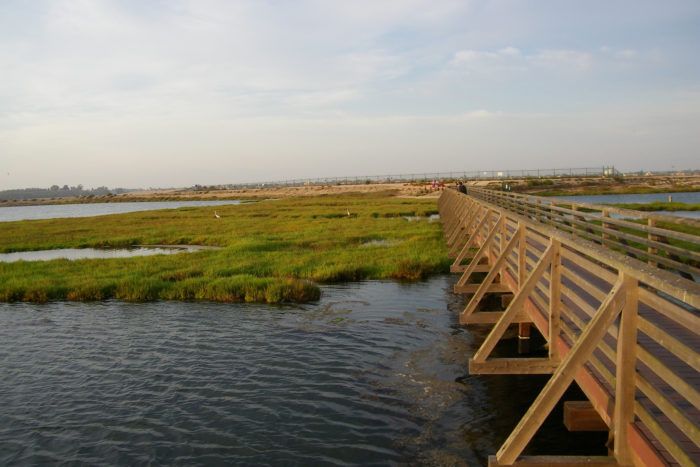 5. Bolsa Chica Ecological Reserve -- Huntington Beach