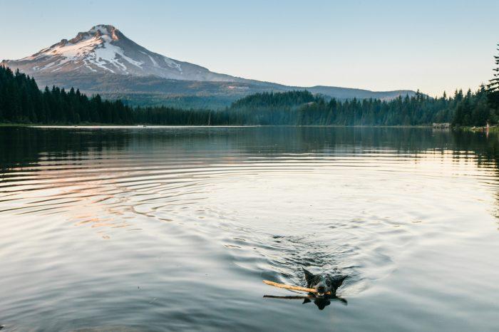 8. Swim in the shadows of Mt. Hood.