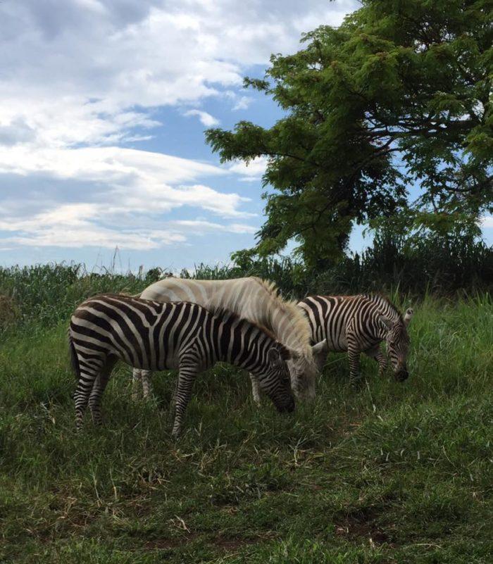 8. Three Ring Ranch Exotic Animal Sanctuary