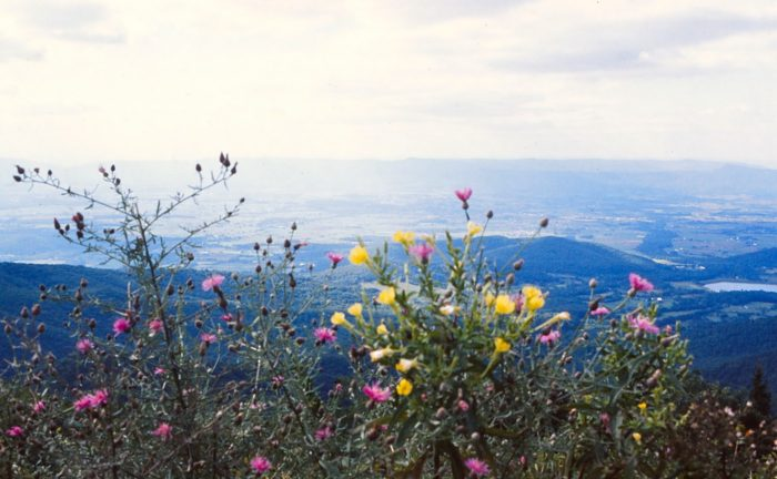 6. Take the iconic Skyline Drive.