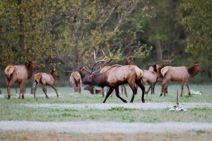 15. Go out to look for elk in Boxley Valley.