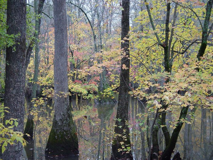 2. Search for an elusive bird at Bayou DeView near Brinkley.