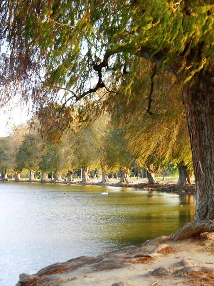 8. There are so many scenic parks in SoCal that make for a heavenly spot to spend an afternoon, such as this tree-lined haven at Fairmount Park in Riverside.