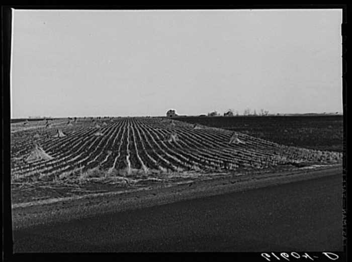 "7. ""Cornfield. Brown County, South Dakota,"" 1940"