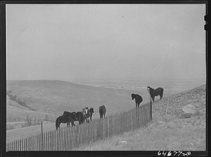 "10. ""Grazing country. Corson County, South Dakota,"" 1942"