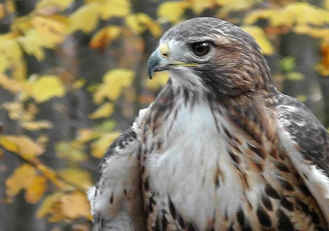 9. Visit rare birds of prey at Hawk Mountain Sanctuary in Kempton.