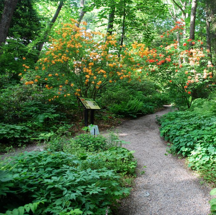 Due to the fragility of the rare plants, visitors are asked to stay on the paths...