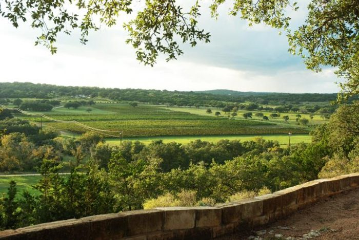 5. Driftwood Estate Winery's stunning view