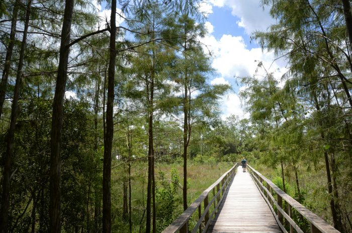 1. Corkscrew Swamp Sanctuary, Naples