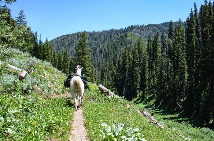 2. Go llama trekking.