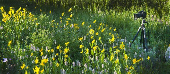 Wildflowers grow everywhere along this hike!