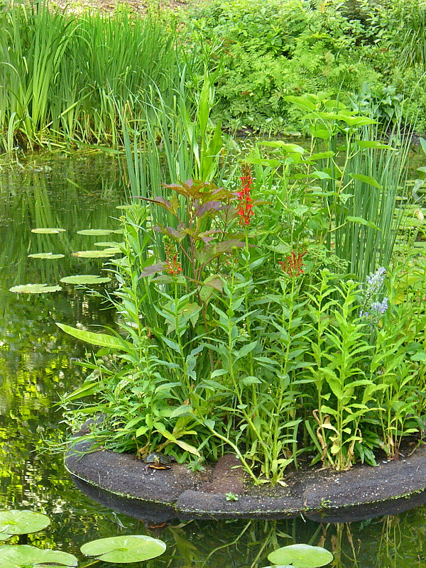 """There are also """"floating gardens"""" that drift across the surface of the pond. Occasionally, turtles may hitch a ride."""