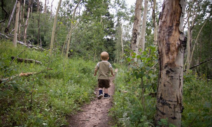 Wander through aspen groves and evergreen forests.