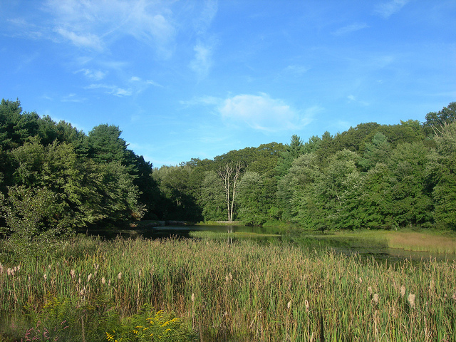 2. This photo of a secluded pond is so very serene.