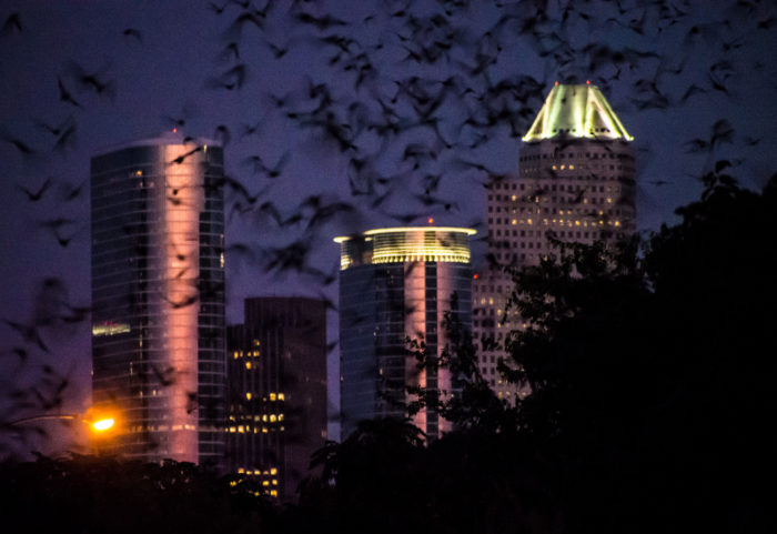 10. Austin isn't the only place to see bats - thousands emerge from underneath the Waugh Drive bridge every summer night.