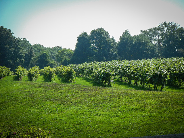 16. This vineyard in Middletown offers a lovely landscape to explore.