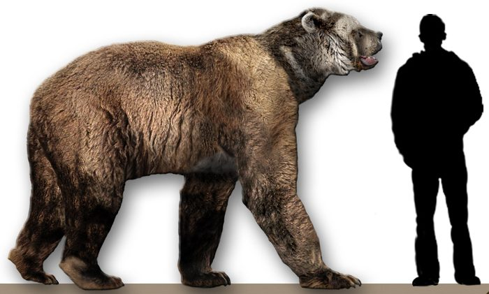 In 1967, the fossil of a prehistoric cave bear was found in the cave.