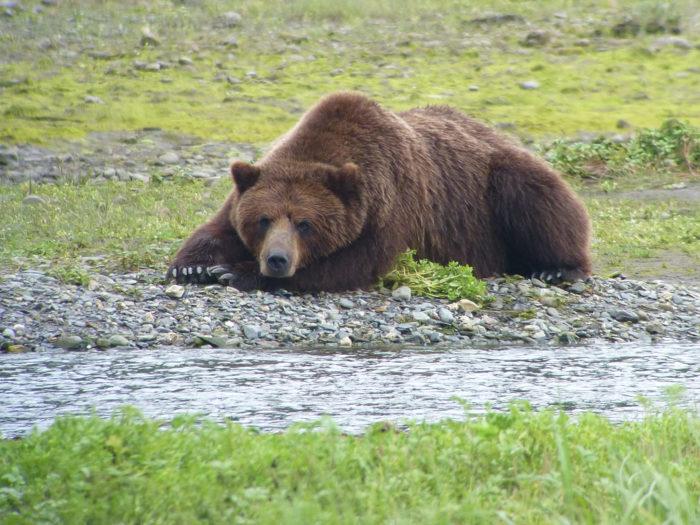BEAR UP CLOSE Flickr - USDA Forest Service Alaska Region