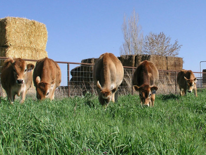 7. Ballard Family Dairy Farm and Cheese Factory, Gooding