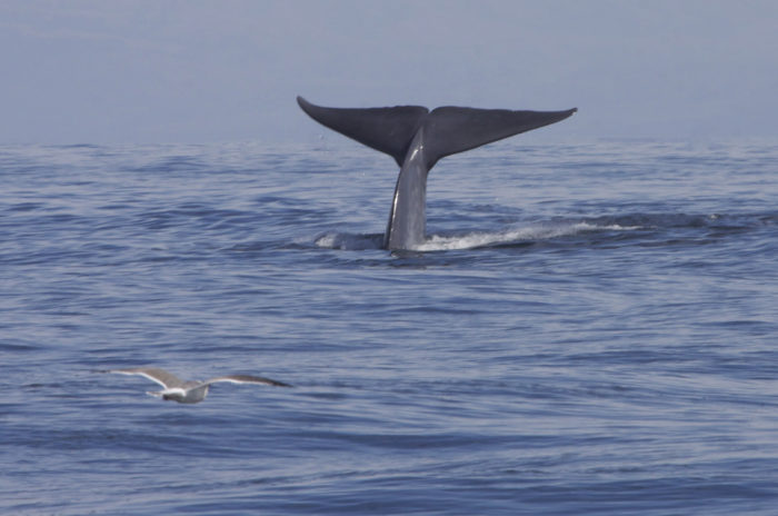 You might even be able to spot a whale or dolphin right offshore.