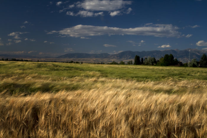 5. Is it true that there are hardly any people in Montana?