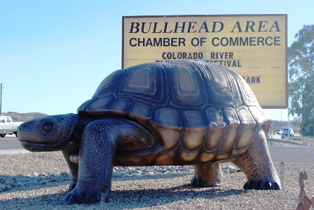 12. The World's Largest Desert Tortoise is located in Bullhead City and is apparently named Poki!