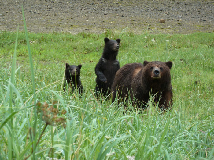 CUBS Flickr - USDA Forest Service Alaska Region
