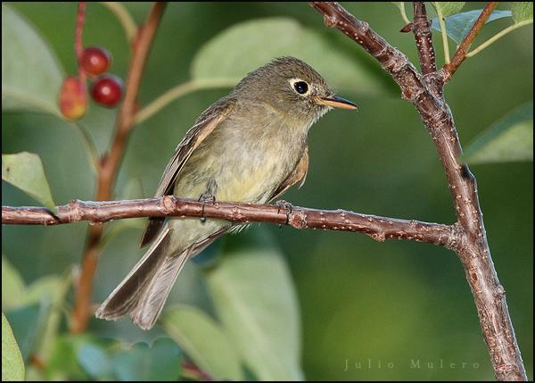 Bird in LAmoille