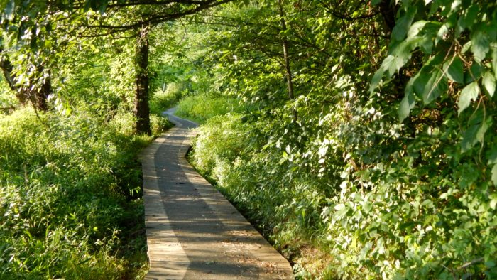 Portions of the trail follow wooden bridges into the woods...